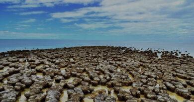 Stromatolitler: Dünyadaki en erken yaşam fosilleri varlıklarını virüslere borçlu olabilir.